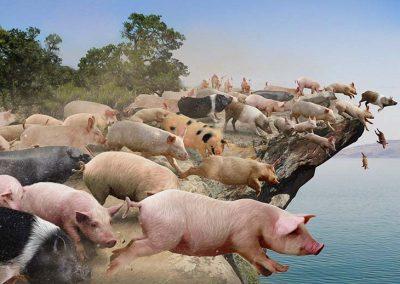 3 - Piara de cerdos